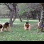 野外でM男を集団調教するすごい女王様動画
